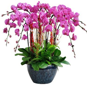 9 dallı mor orkide  Afyon 14 şubat sevgililer günü çiçek