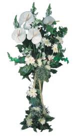 Afyon çiçek mağazası , çiçekçi adresleri  antoryumlarin büyüsü özel