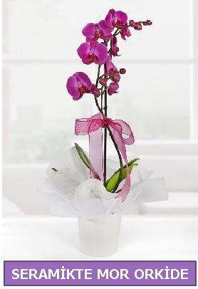 Seramik içerisinde birinci kalite tek dallı mor orkide  Afyon İnternetten çiçek siparişi