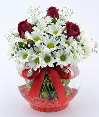 Fanusta 3 Gül ve Papatya  Afyon internetten çiçek satışı