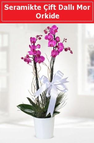 Seramikte Çift Dallı Mor Orkide  Afyon anneler günü çiçek yolla