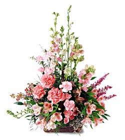 Afyon ucuz çiçek gönder  mevsim çiçeklerinden özel