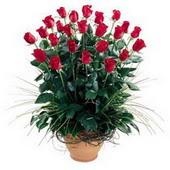 Afyon uluslararası çiçek gönderme  10 adet kirmizi gül cam yada mika vazo