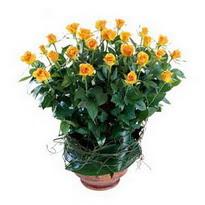 Afyon cicekciler , cicek siparisi  10 adet sari gül tanzim cam yada mika vazoda çiçek