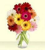 Afyon çiçek yolla , çiçek gönder , çiçekçi   cam yada mika vazoda 15 özel gerbera