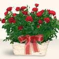 Afyon İnternetten çiçek siparişi  11 adet kirmizi gül sepette
