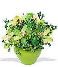 cam yada mika vazoda 5 adet orkide   Afyon online çiçekçi , çiçek siparişi