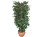 Afyon çiçek siparişi sitesi  Özel Mango 1,75 cm yüksekliginde