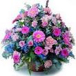 karisik mevsim kir çiçekleri  Afyon çiçek gönderme sitemiz güvenlidir