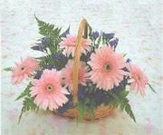 gerbera çiçeklerinde sepet   Afyon çiçek yolla