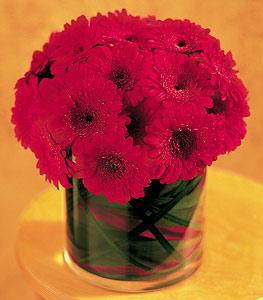 Afyon ucuz çiçek gönder  23 adet gerbera çiçegi sade ve sik cam içerisinde