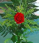 1 adet kirmizi gül buketi   Afyon çiçek siparişi vermek