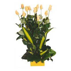 12 adet beyaz gül aranjmani  Afyon kaliteli taze ve ucuz çiçekler