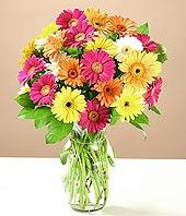 Afyon çiçek online çiçek siparişi  17 adet karisik gerbera
