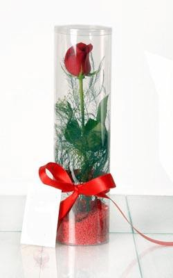 Afyon çiçek yolla  Silindir vazoda tek kirmizi gül