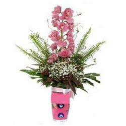 Afyon hediye çiçek yolla  cam yada mika vazo içerisinde tek dal orkide çiçegi