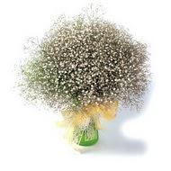 Afyon çiçek mağazası , çiçekçi adresleri  cam yada mika vazo içerisinde cipsofilya demeti