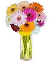 Afyon internetten çiçek siparişi  Farkli renklerde 15 adet gerbera çiçegi
