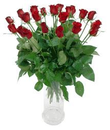 Afyon çiçekçi telefonları  11 adet kimizi gülün ihtisami cam yada mika vazo modeli