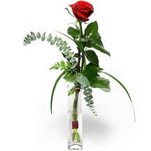 Afyon 14 şubat sevgililer günü çiçek  Sana deger veriyorum bir adet gül cam yada mika vazoda