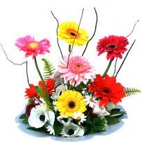 Afyon hediye çiçek yolla  camda gerbera ve mis kokulu kir çiçekleri