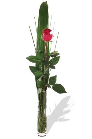 1 adet cam vazo içerisinde kirmizi gül  Afyon çiçek , çiçekçi , çiçekçilik
