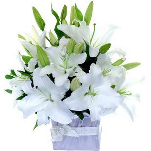 Afyon çiçek yolla  2 dal cazablanca vazo çiçeği