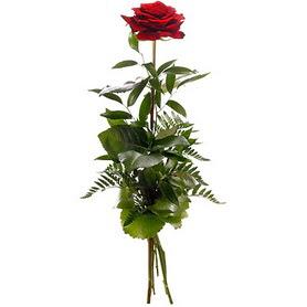 Afyon online çiçekçi , çiçek siparişi  1 adet kırmızı gülden buket