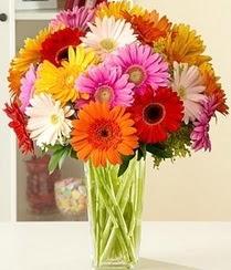 Afyon çiçek servisi , çiçekçi adresleri  15 adet gerbera çiçek vazosu