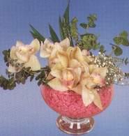 Afyon çiçek mağazası , çiçekçi adresleri  Dal orkide kalite bir hediye