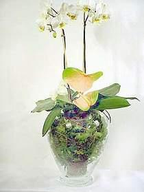 Afyon çiçek satışı  Cam yada mika vazoda özel orkideler
