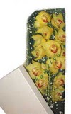 Afyon çiçek gönderme  Kutu içerisine dal cymbidium orkide