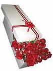 Afyon çiçekçi telefonları  11 adet 1.kalite magnum güller