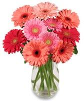 vazo içerisinde 13 adet gerbera çiçeği  Afyon çiçek siparişi sitesi
