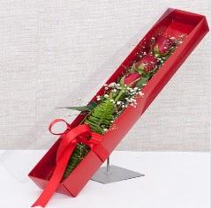 Kutu içerisinde 3 adet kırmızı gül  Afyon online çiçek gönderme sipariş