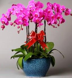 7 dallı mor orkide  Afyon çiçek online çiçek siparişi