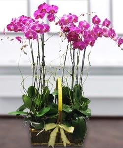 4 dallı mor orkide  Afyon güvenli kaliteli hızlı çiçek