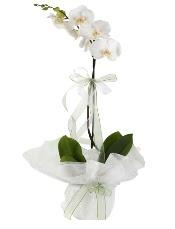1 dal beyaz orkide çiçeği  Afyon çiçek siparişi vermek
