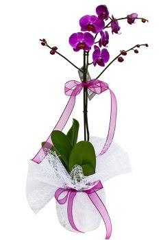 Tek dallı mor orkide  Afyon çiçekçi telefonları