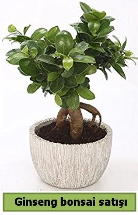 Ginseng bonsai japon ağacı satışı  Afyon çiçekçi telefonları