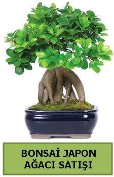 Bonsai japon ağacı satışı  Afyon çiçek satışı