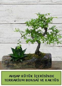 Ahşap kütük bonsai kaktüs teraryum  Afyon internetten çiçek siparişi
