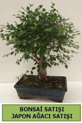 Minyatür bonsai japon ağacı satışı  Afyon çiçek gönderme sitemiz güvenlidir
