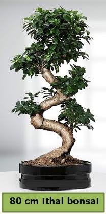 80 cm özel saksıda bonsai bitkisi  Afyon çiçekçi telefonları