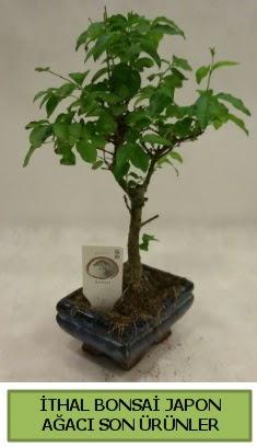 İthal bonsai japon ağacı bitkisi  Afyon hediye sevgilime hediye çiçek