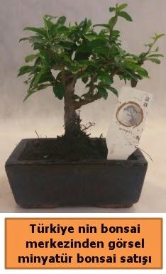 Japon ağacı bonsai satışı ithal görsel  Afyon çiçek yolla
