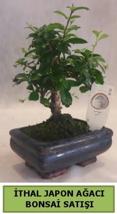 İthal japon ağacı bonsai bitkisi satışı  Afyon çiçekçi telefonları