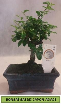 Minyatür bonsai ağacı satışı  Afyon çiçek gönderme