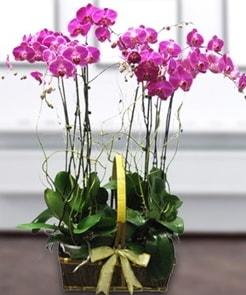 7 dallı mor lila orkide  Afyon çiçek gönderme sitemiz güvenlidir