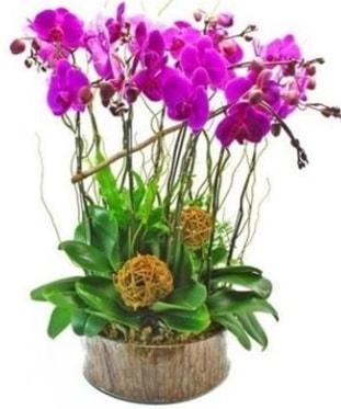Ahşap kütükte lila mor orkide 8 li  Afyon internetten çiçek satışı